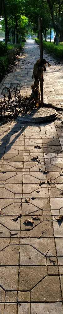 大亚湾石化大道,阳光下的陷阱