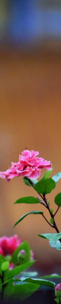 大亚湾的花草